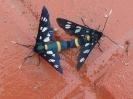 Πεταλούδες-Η φύση ανήκει σε όλους